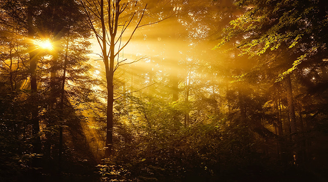 The opportunity in YouTube advertising to generate consistent and inexpensive conversions is like a golden light in a dark forest.